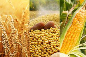 ترجمه متون تخصصی کشاورزی - ترجمه مقاله و متن رشته مهندسی کشاورزی